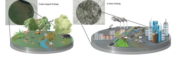 Figure 1. Adaptive pressures in the urban context. See text for additional description.