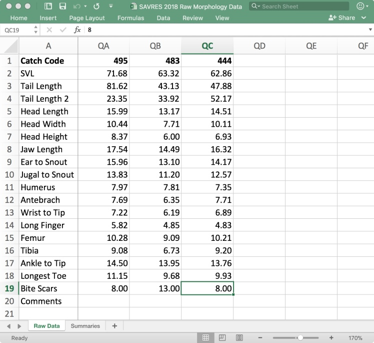 Excel.jpeg